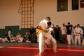judo-lok-077
