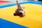 Judo2012-KFA-218